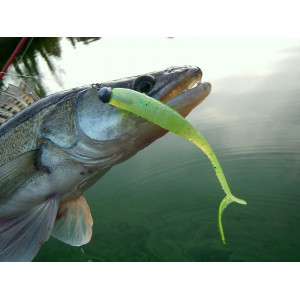 http://www.exotic-anglers.fr/3010-9485-thickbox/megabass-x-layer-curly-5-.jpg